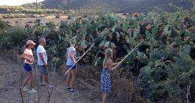 Sardinian Week